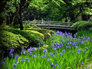 Zonnige groene tuin Japan