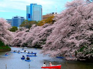 Japan Tokyo - Rivier bloesem