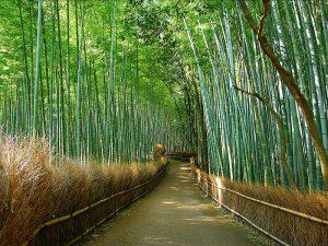 Maak een wandeling door het bamboebos van Arashiyama
