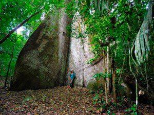 Geführte Dschungelwanderung nahe Leticia