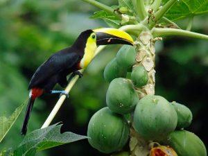 Nuqui Dschungelwanderung