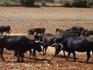 Andalusien Rundreise Route der Stiere