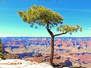 GC-uitzicht-boom