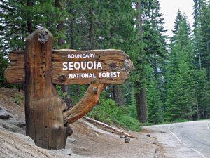 Sequoia-entree