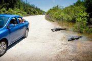 Rondreis 1: Florida Sun & Fun