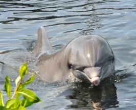 Dolfijnen florida