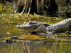 Everglades reizen Florida