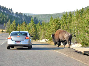 Rondreis 4: National Parks Adventure