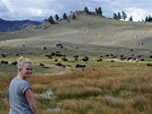 buffels-yellowstone