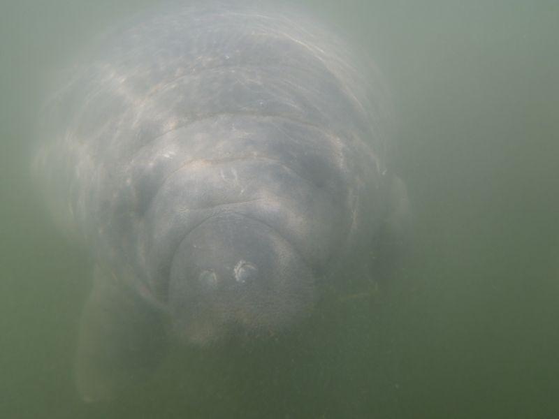 zeekoeien Florida