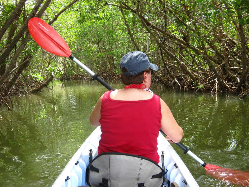 Kayak-Mangrove-Everglades