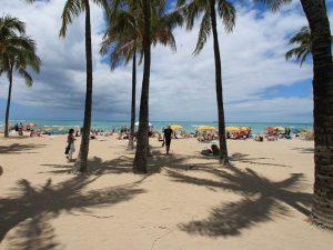 Palmenstrand Waikiki beach