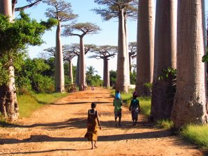 Allée des Baobabs 3 Wochen Madagaskar