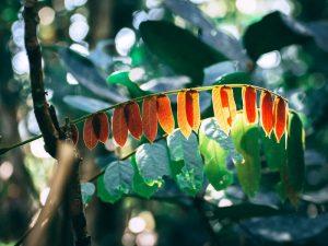 Exotische Pflanzen Isalo Nationalpark 3 Wochen Madagaskar