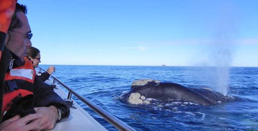 Argentinie reis walvissen