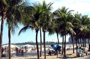 palmen copacabana rio de janeiro