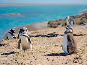 busreis peninsula pinguins