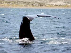 argentinie walvis staat