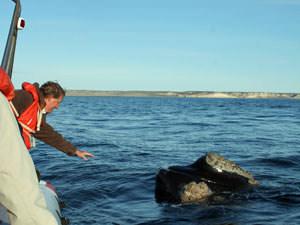 Walvissen Argentinië
