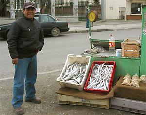 Punta Arenas Chili