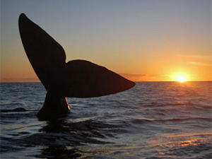 vakantie argentinie walvis spotten