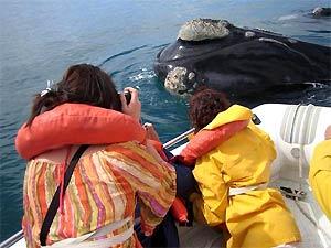 walvissen van dichtbij