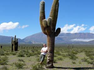 Rondreis Argentinie hoogte: cactussen