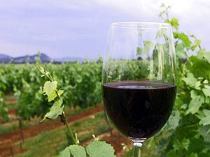 wijnvallei chili reisvwerslagen glas