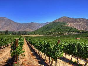 wijnvallei Santiago Maipo