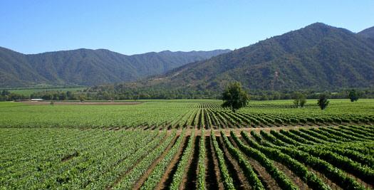 Argentinie reizen wijnveld