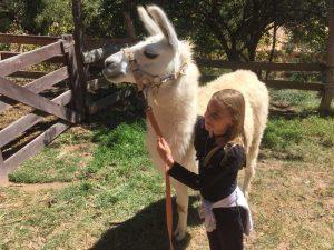 argentinië rondreis lama