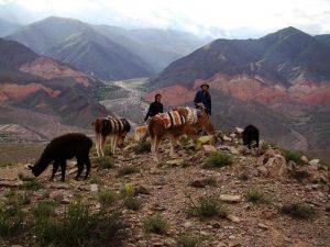 argentinië rondreis lama trek