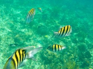 strand Playa Pesquero - Snorkelen, Cuba
