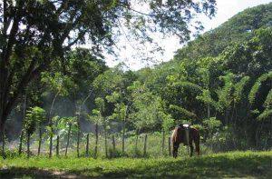 Rondreis Cuba drie weken - Finca del Belen