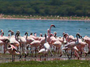 Nairobi reis bezoek Lake Navaisha