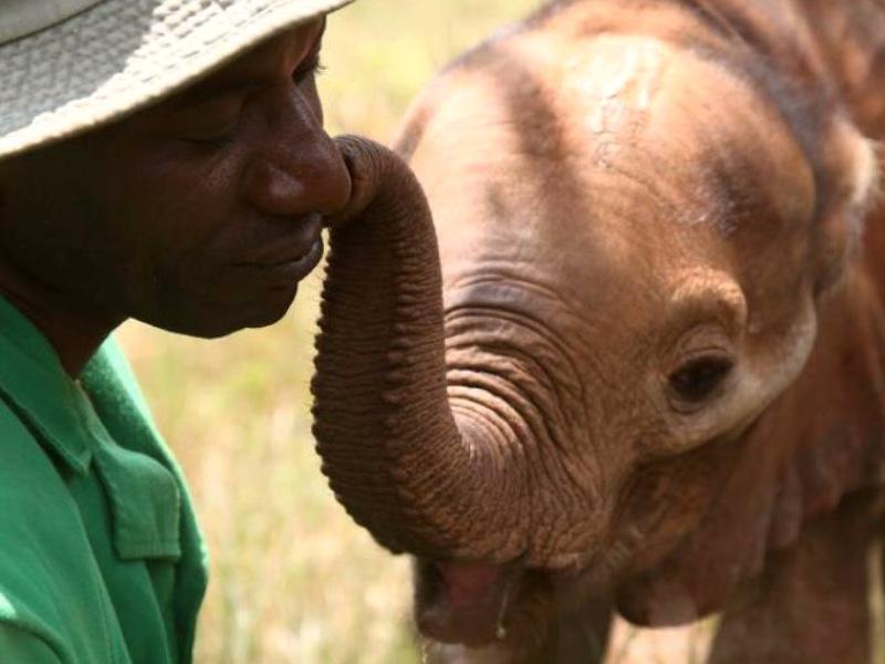 Excursie Nairobi - opvang olifanten