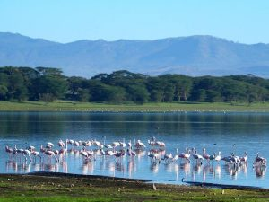 Lake Navaisha met roze flamingo's