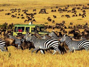 Reisroute Tanzania Kenia met kinderen - Serengeti National Park migratie