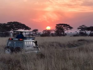 Safari Tanzania - wild spotten bij zonsondergang op de Serengeti
