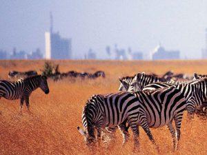 Kenia vakantie twee weken - Nairobi