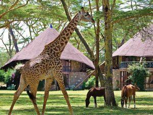 Safari Kenia - huisje bij Lake Navaisha