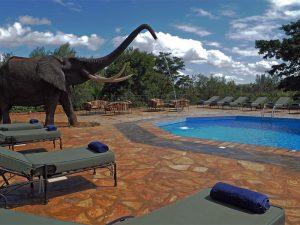 National Park Tanzania - campsite met zwembad