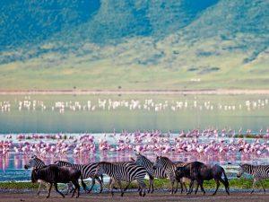 Flamingo's tijdens je Tanzania safari