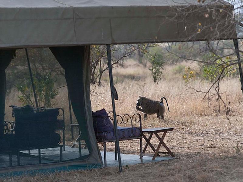 National Park Tanzania - uitzich Serengeti tent