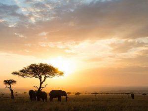 Amboseli-Tsavo - Olifanten zonsopgang