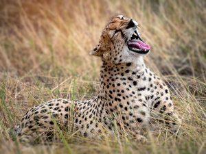 Tanzania safari - Serengeti national park