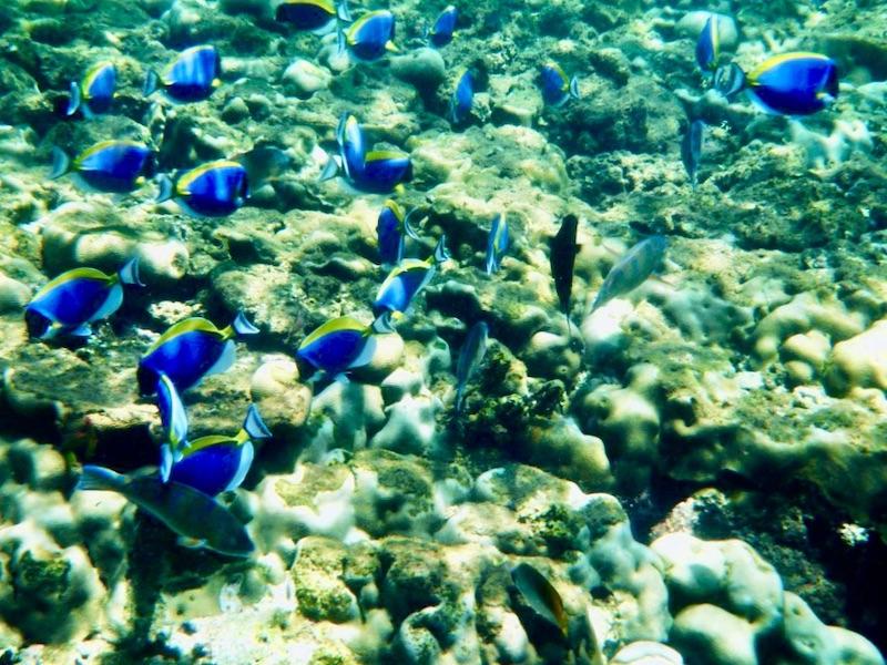 Zanzibar - snorkelen