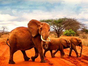 Oranje wereld van Tsavo tijdens je Kenia safari