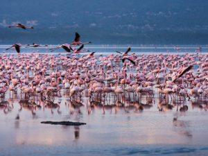 Kenia vakantie twee weken - Lake Navaishu