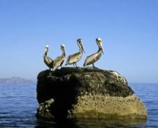 Insel im türkisblauen Meer vor Loreto